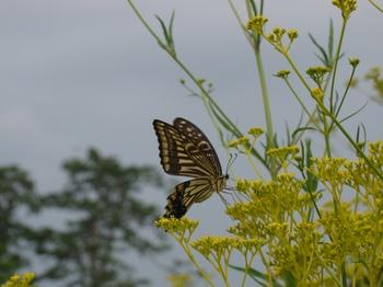 花と蝶の舞.jpg